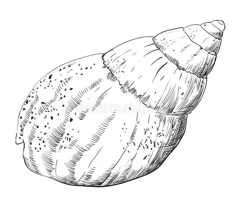 Χέρι που σύρει θαλασσινό κοχύλι-11 ελεύθερη απεικόνιση δικαιώματος