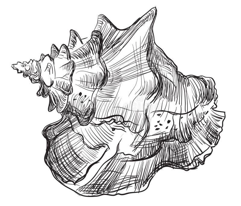 Χέρι που σύρει θαλασσινό κοχύλι-13 απεικόνιση αποθεμάτων