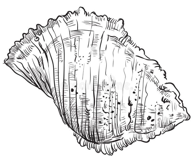 Χέρι που σύρει θαλασσινό κοχύλι-18 διανυσματική απεικόνιση