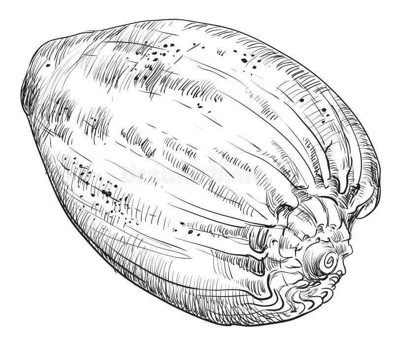 Χέρι που σύρει θαλασσινό κοχύλι-20 ελεύθερη απεικόνιση δικαιώματος