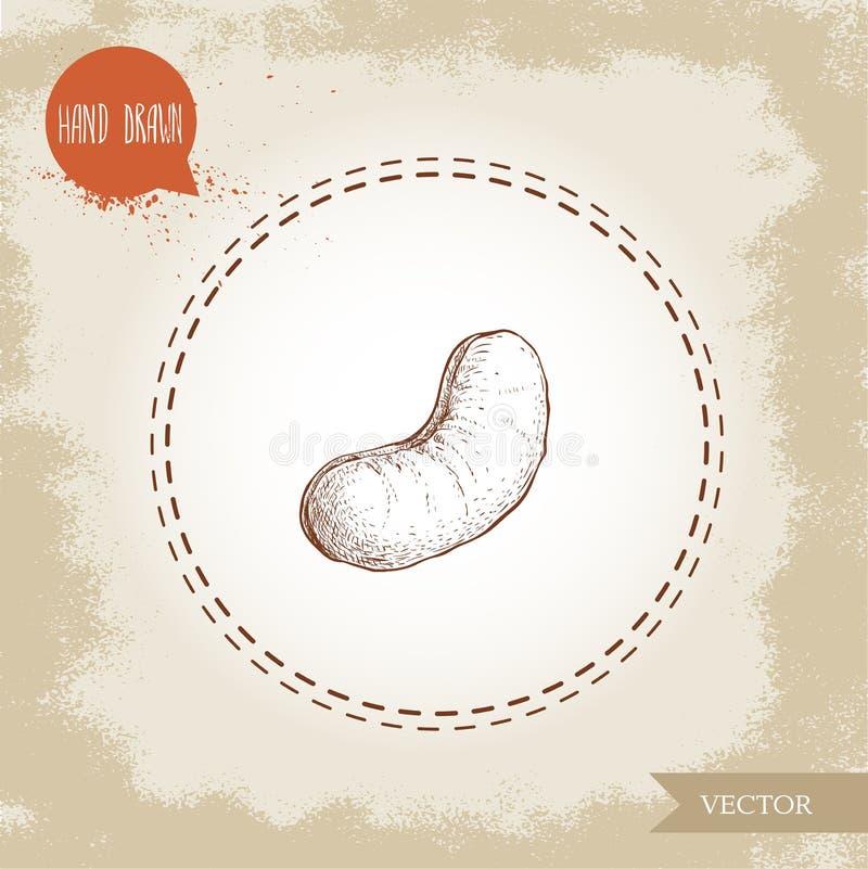 Χέρι σκίτσων καρυδιών των δυτικών ανακαρδίων που σύρεται Ενιαίο ψημένο καρύδι που απομονώνεται στο παλαιό υπόβαθρο Υγιή τρόφιμα e ελεύθερη απεικόνιση δικαιώματος