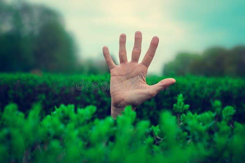 Χέρι στα νέα πράσινα φύλλα στοκ φωτογραφίες