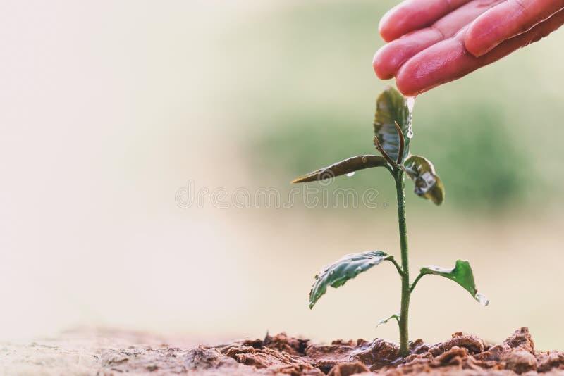 Χέρι της Farmer που ποτίζει νέες εγκαταστάσεις στην πράσινη φύση bokeh στοκ φωτογραφίες