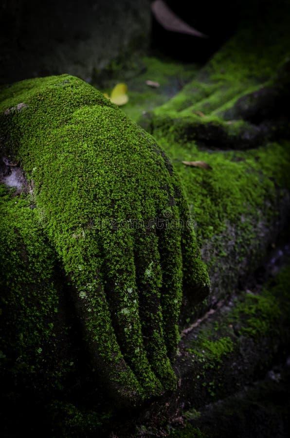 Χέρι του Βούδα που καλύπτεται στο βρύο στοκ φωτογραφίες