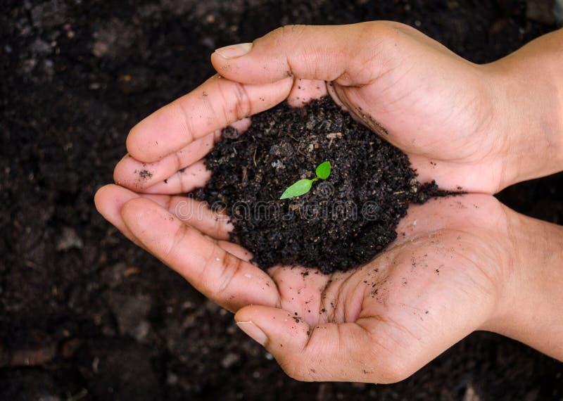 Χέρι των εγκαταστάσεων νεαρών βλαστών εκμετάλλευσης αγροτών Ανάπτυξη και παγιοποίηση του δέντρου στοκ εικόνες