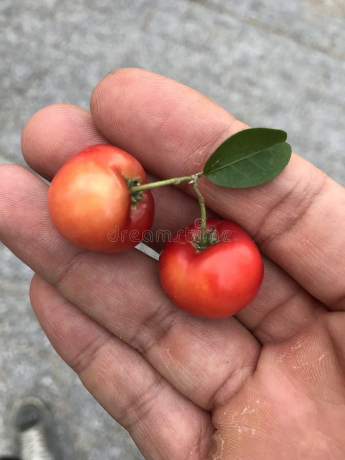 Χέρι Person's που κρατά φρούτα acerola στοκ εικόνα