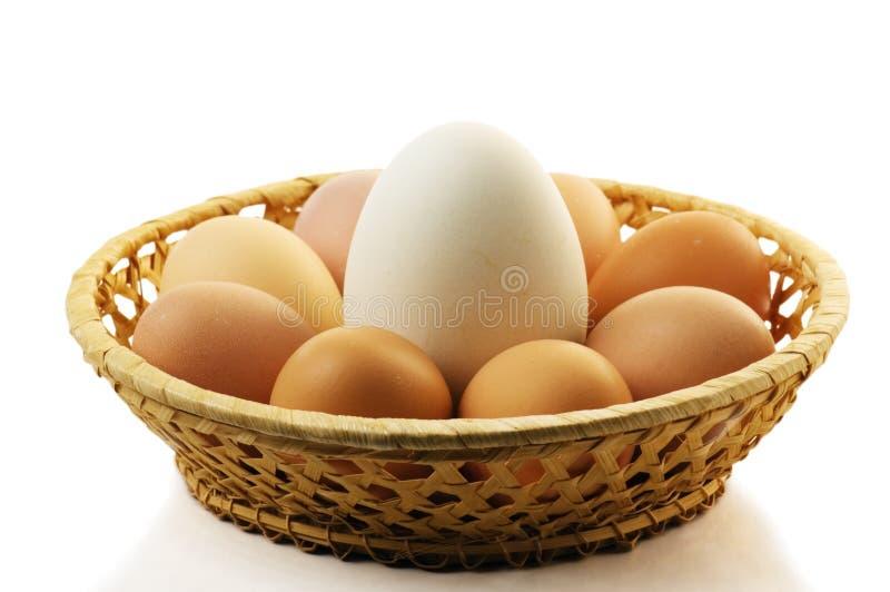 χήνα αυγών στοκ εικόνες