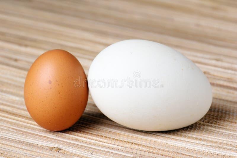 χήνα αυγών στοκ φωτογραφία με δικαίωμα ελεύθερης χρήσης