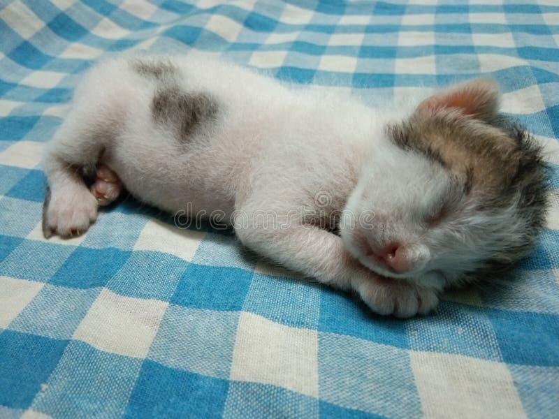 Χαλάρωση νέα - γεννημένο γατάκι μωρών στοκ εικόνα