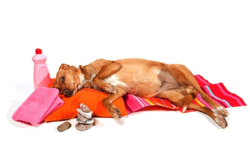 χαλάρωση σκυλιών στοκ φωτογραφία με δικαίωμα ελεύθερης χρήσης