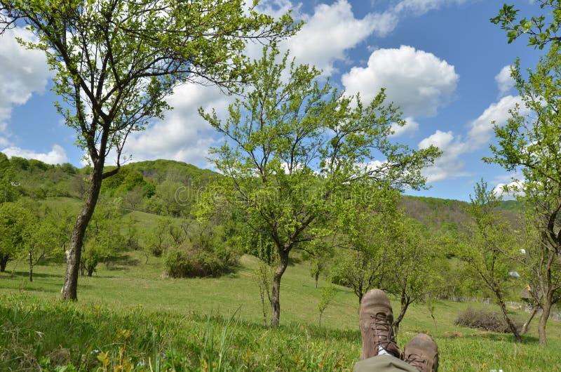 Χαλάρωση στον πράσινο οπωρώνα την ηλιόλουστη ημέρα άνοιξη στοκ εικόνες με δικαίωμα ελεύθερης χρήσης
