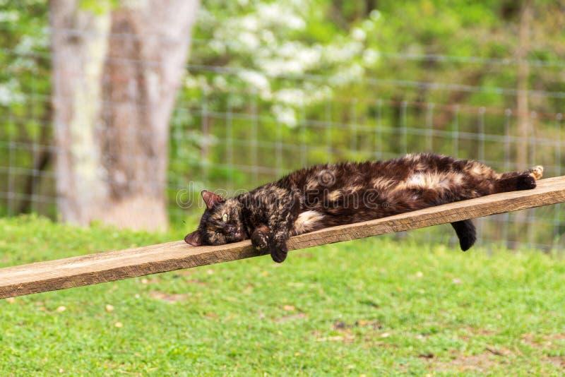 Χαλάρωση των Μαύρων και γατών σκουριάς σε μια σανίδα στο αγρόκτημα στοκ εικόνες