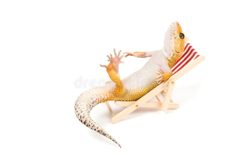 χαλάρωση gecko εδρών παραλιών στοκ εικόνες