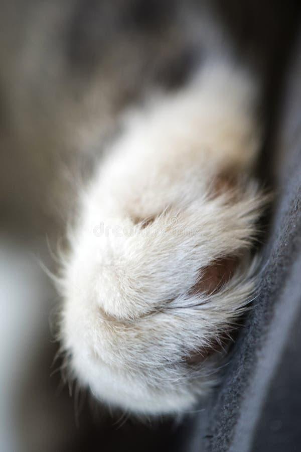 Χαλαρωμένη χαριτωμένη, ριγωτή και γάτα ύπνου στοκ εικόνες