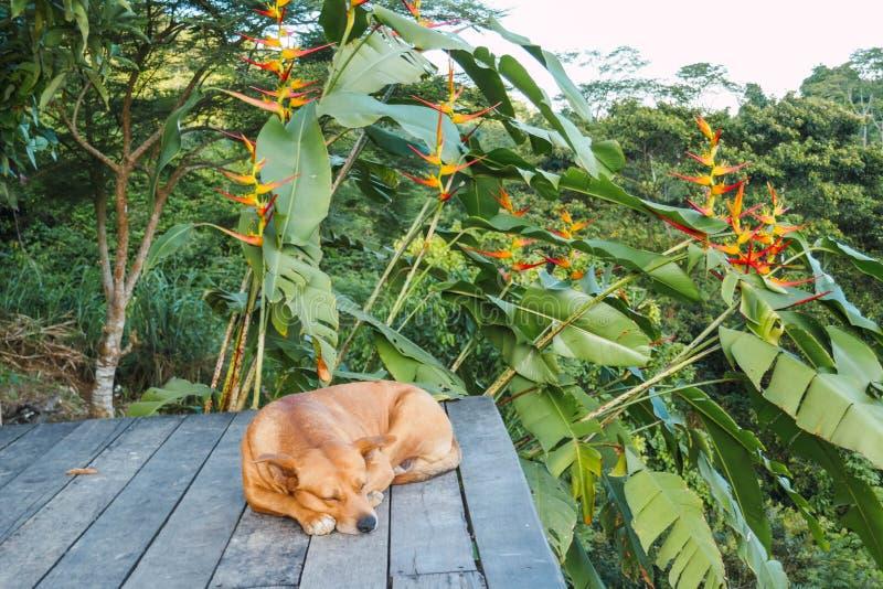 Χαλαρωμένο σκυλί και στήριξη υπαίθρια, υπόβαθρο ζουγκλών στοκ εικόνες