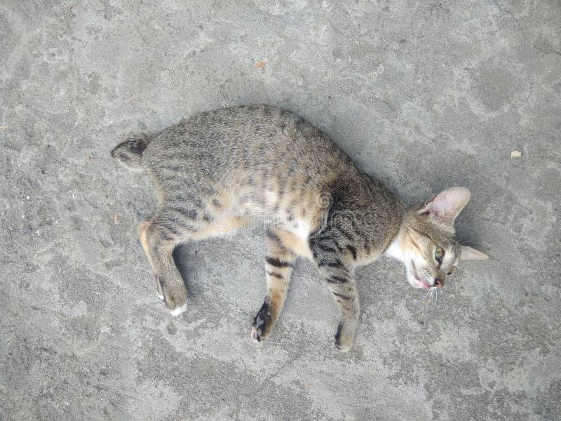 Χαλαρώστε τη γάτα το πρωί στοκ εικόνες με δικαίωμα ελεύθερης χρήσης