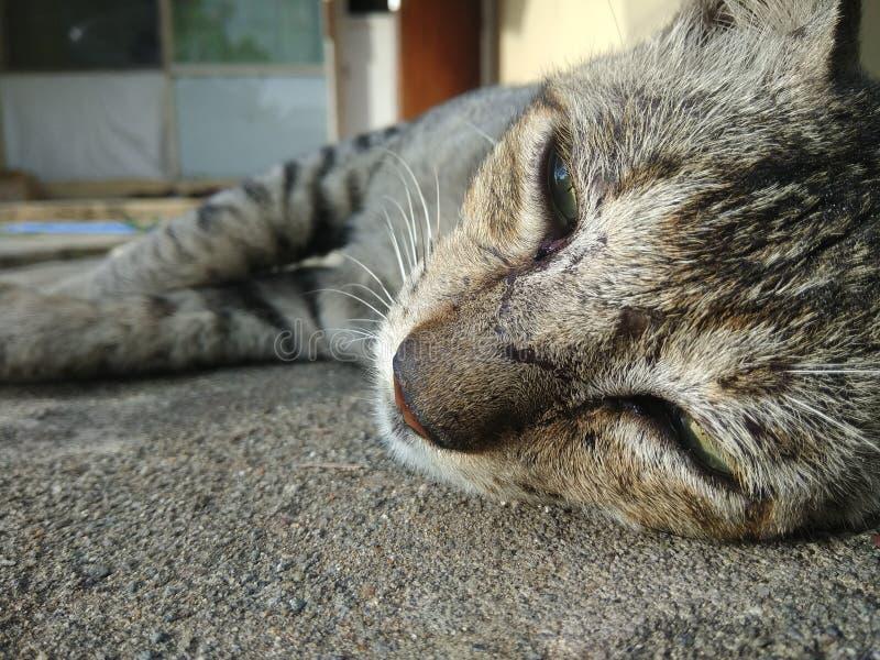 Χαλαρώστε τη γάτα στοκ εικόνες με δικαίωμα ελεύθερης χρήσης