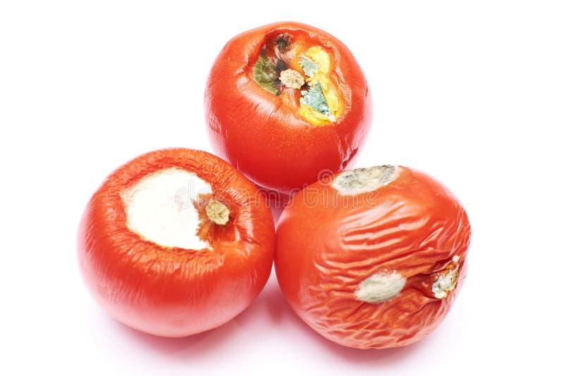 Χαλασμένες ντομάτες απομονωμένη στοκ φωτογραφία με δικαίωμα ελεύθερης χρήσης