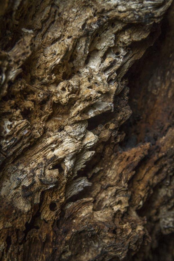 Χαλασμένη ξυλεία που δημιουργείται από τους τερμίτες στοκ φωτογραφίες με δικαίωμα ελεύθερης χρήσης