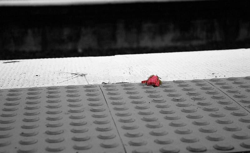 Χαμένη αυξήθηκε αποτύπωση συγκομιδών στοκ εικόνα