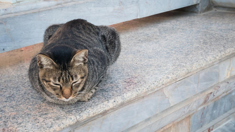 χαμένη γάτα ή τοπική γάτα στο ναό ή το πάρκο στοκ φωτογραφία με δικαίωμα ελεύθερης χρήσης