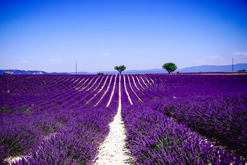 Χαμένος Lavender στον τομέα - Valensole, Γαλλία - τόσο ιώδης! στοκ φωτογραφία