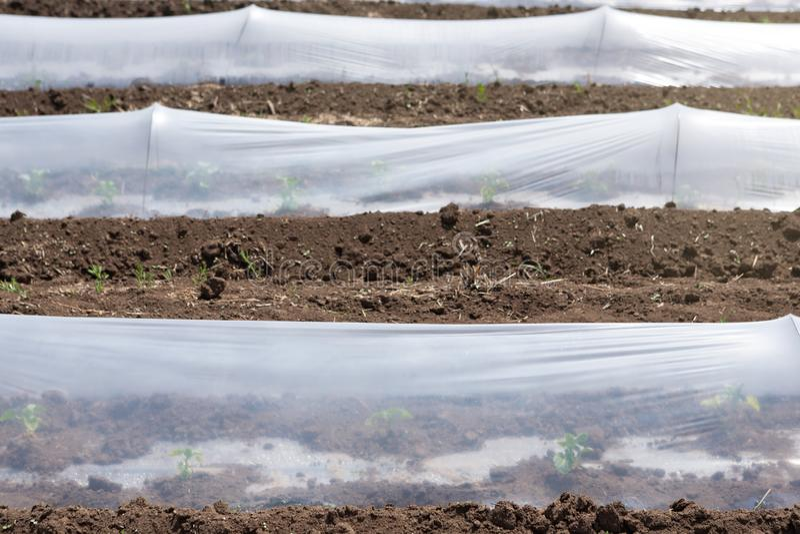 Χαμηλά θερμοκήπια, πλαστική ταινία στο έδαφος, σπορόφυτα ανάπτυξης ή πρόωρα λαχανικά στοκ φωτογραφίες με δικαίωμα ελεύθερης χρήσης
