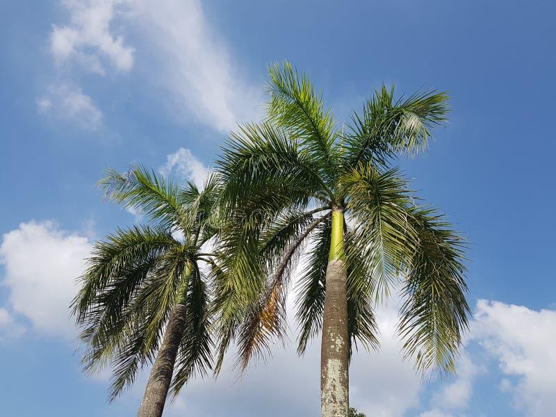 Χαμηλή άποψη γωνίας των τροπικών φοινίκων ενάντια στο μπλε ουρανό στοκ φωτογραφία με δικαίωμα ελεύθερης χρήσης