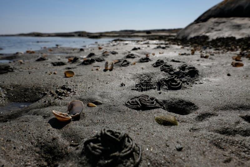 Χαμηλή άποψη παραλιών γωνίας αμμώδης με τα κοχύλια στοκ φωτογραφίες
