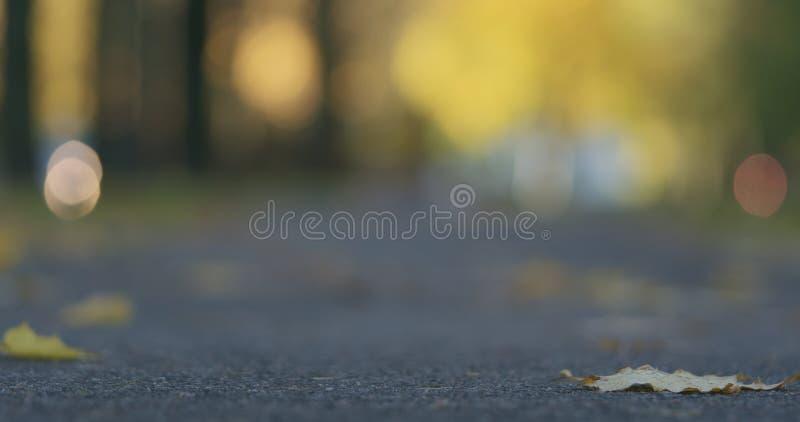 Χαμηλός πυροβολισμός γωνίας των πεσμένων φύλλων φθινοπώρου στο πεζοδρόμιο το πρωί με την κίνηση των αυτοκινήτων στο υπόβαθρο στοκ φωτογραφία με δικαίωμα ελεύθερης χρήσης