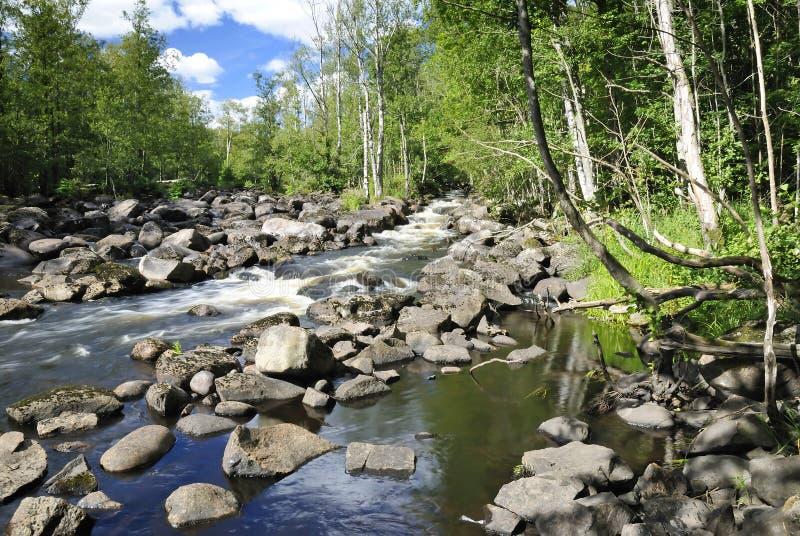 χαμηλός σολομός ποταμών ε στοκ φωτογραφίες