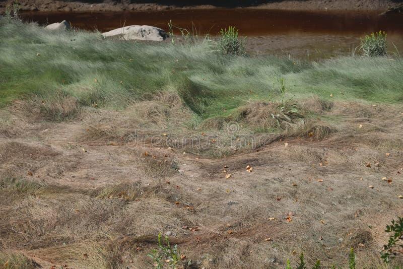 Χαμηλή παλίρροια που εκθέτει τους βράχους, τους λίθους και τα πεσμένα δέντρα σε ένα Μαίην μΑ στοκ φωτογραφία με δικαίωμα ελεύθερης χρήσης