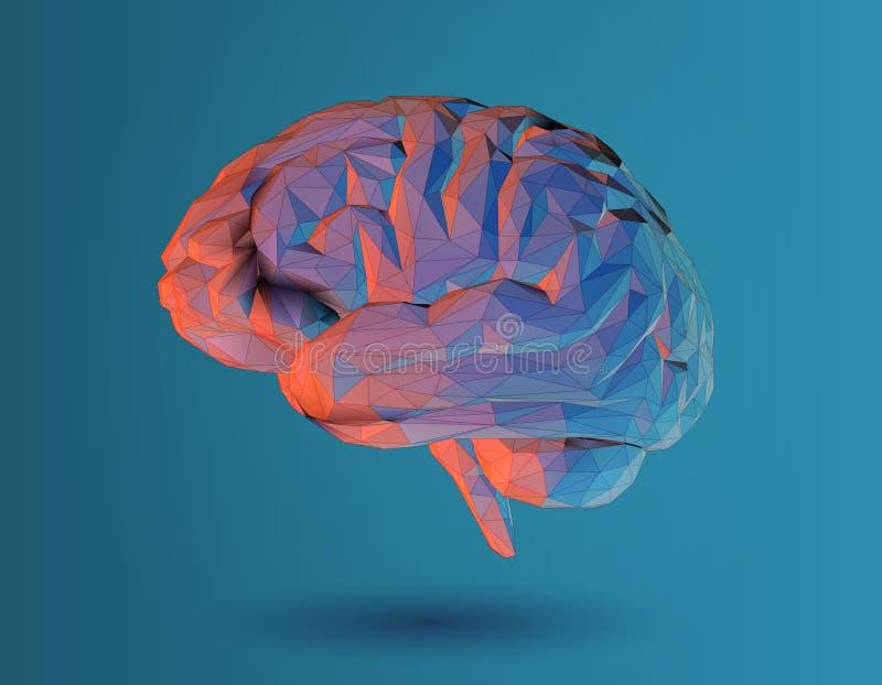 Χαμηλή πολυ τρισδιάστατη απεικόνιση εγκεφάλου στο μπλε υπόβαθρο στοκ εικόνες