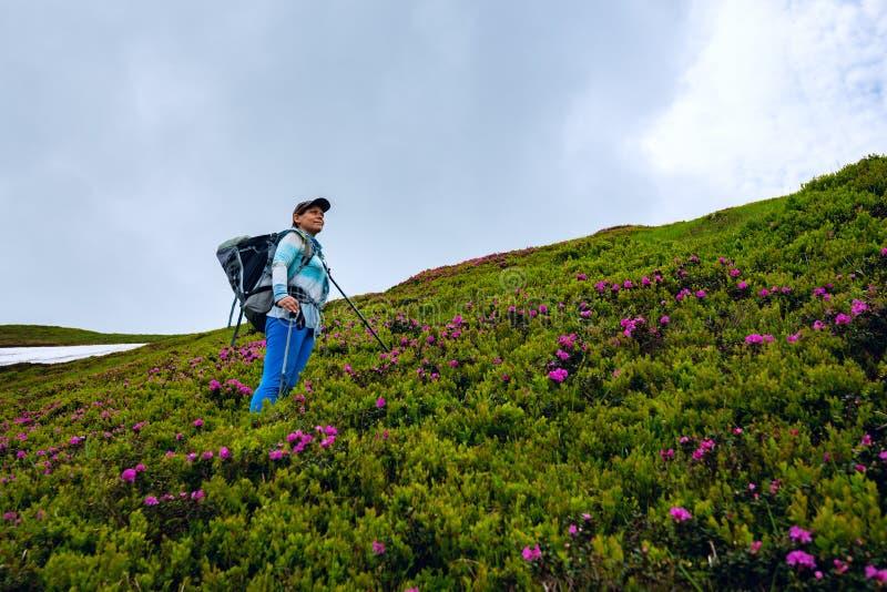 Χαμογελώντας θηλυκό τυχοδιωκτών μεταξύ ανθίζοντας rhododendrons στοκ φωτογραφία