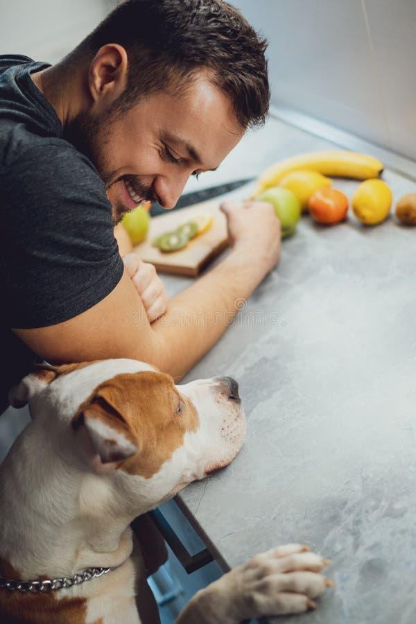 Χαμογελώντας ιδιοκτήτης που εξετάζει το πίτμπουλ του στην κουζίνα στοκ εικόνες
