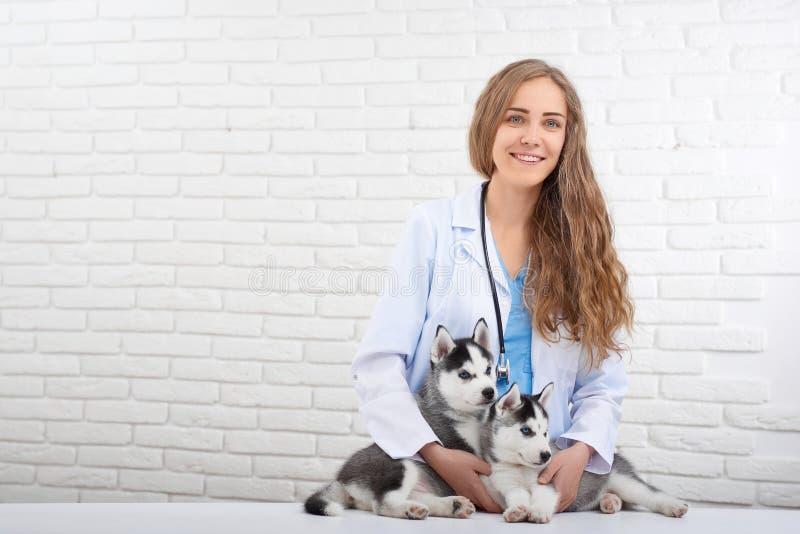 Χαμογελώντας κτηνίατρος που φροντίζει για δύο χαριτωμένα γεροδεμένα σκυλιά στοκ φωτογραφία με δικαίωμα ελεύθερης χρήσης