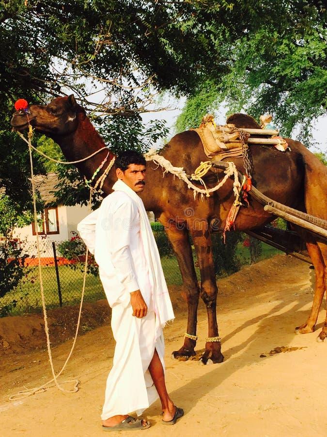 Χαμόγελο της καμήλας/ινδικού OwnerAngry στοκ φωτογραφία με δικαίωμα ελεύθερης χρήσης