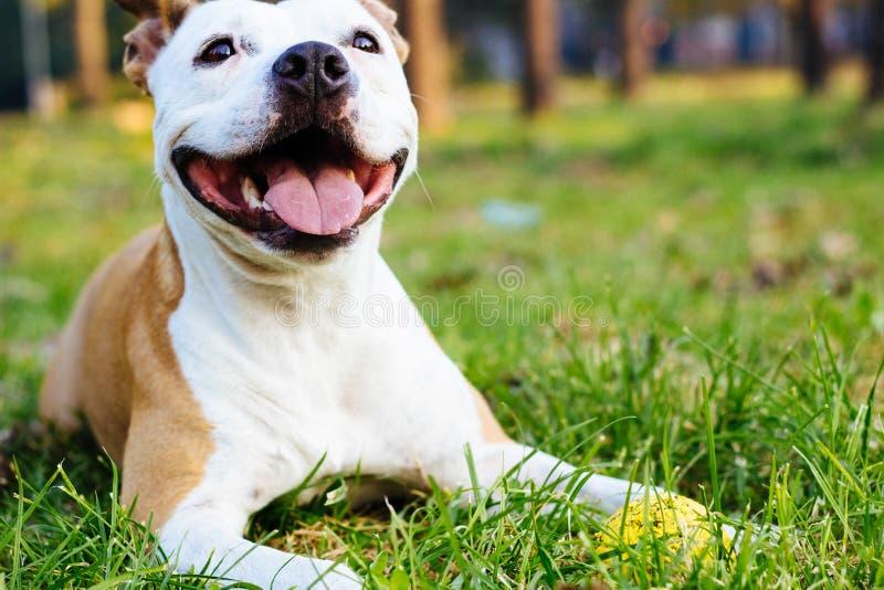Χαμόγελο του σκυλιού με τη σφαίρα στοκ εικόνες