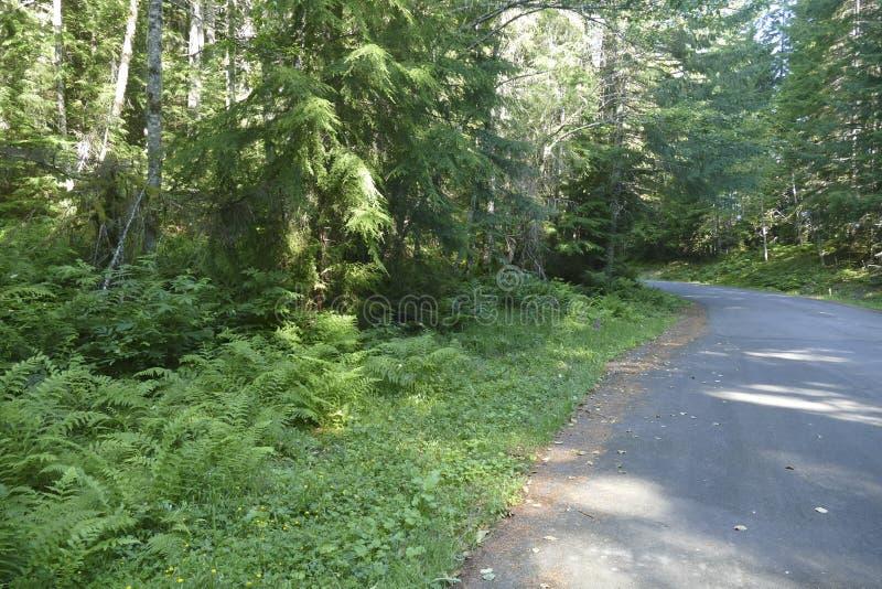 Χαμόκλαδο φτερών στο μικτό δάσος κωνοφόρων και σκληρού ξύλου στοκ εικόνα με δικαίωμα ελεύθερης χρήσης