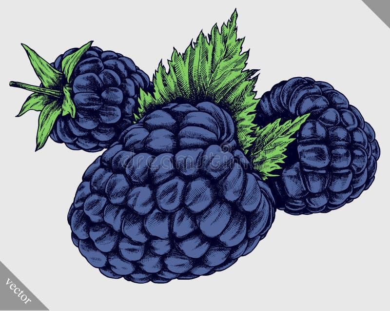 Χαράξτε την απομονωμένη συρμένη γραφική χέρι διανυσματική απεικόνιση του Blackberry απεικόνιση αποθεμάτων