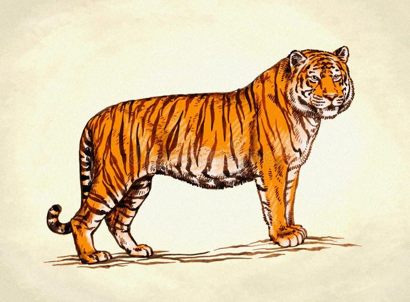 Χαράξτε το μελάνι σύρει την απεικόνιση τιγρών ελεύθερη απεικόνιση δικαιώματος