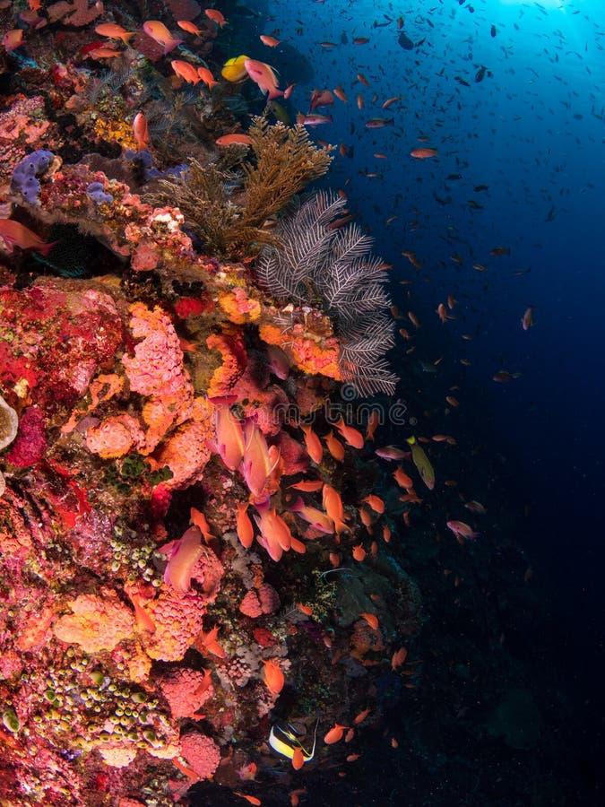 Χαρακτηριστική κοραλλιογενής ύφαλος στο εθνικό πάρκο Komodo στοκ φωτογραφία με δικαίωμα ελεύθερης χρήσης