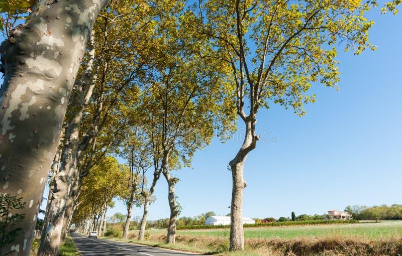 Χαρακτηριστικός δενδρώδης γαλλικός δρόμος αεροπλάνων στοκ εικόνες με δικαίωμα ελεύθερης χρήσης