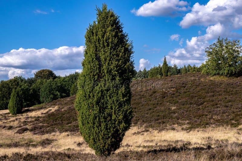 Χαρακτηριστικό γερμανικό τοπίο ρεικιών στην επιφύλαξη φύσης Lüneburger Heide στοκ εικόνα με δικαίωμα ελεύθερης χρήσης