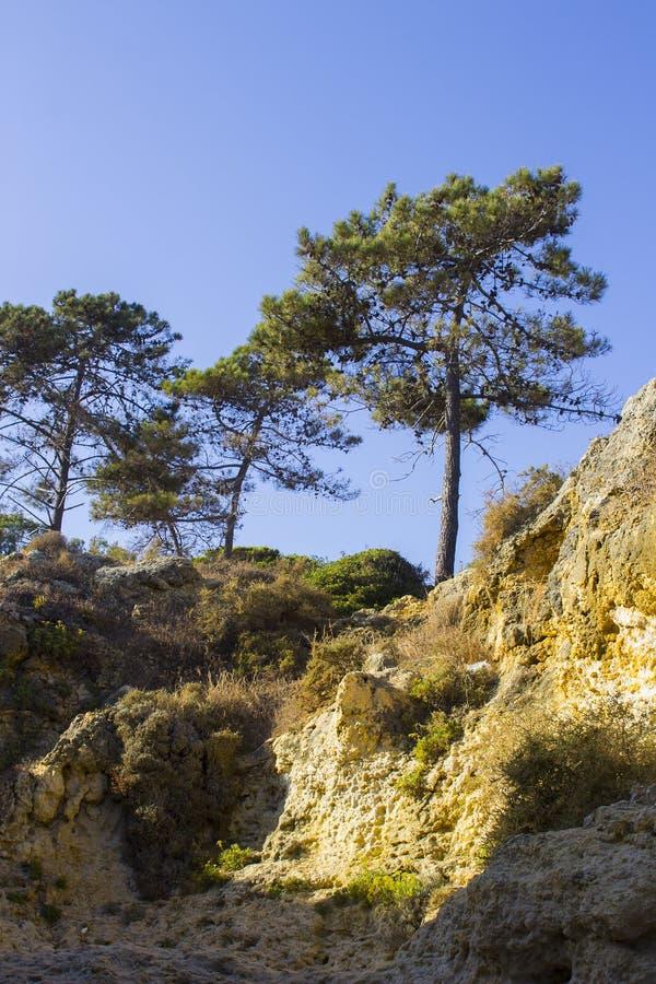 Χαρακτηριστικό εκτεθειμένο ιζηματώδες πρόσωπο απότομων βράχων πετρών άμμου στην παραλία Praia DA Oura σε Albuferia με τα δέντρα π στοκ εικόνες