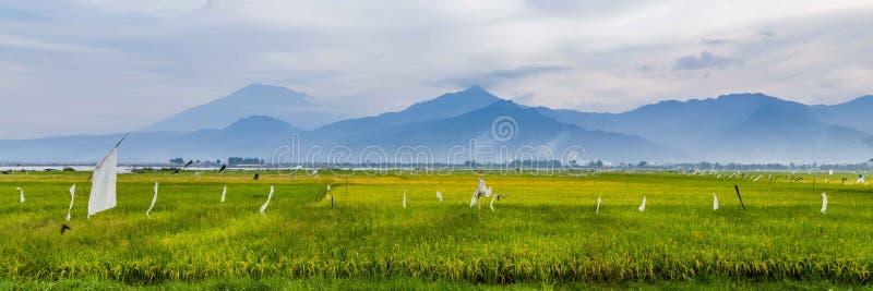 Χαρακτηριστικό τοπίο κεντρική Ιάβα Ινδονησία στοκ εικόνες