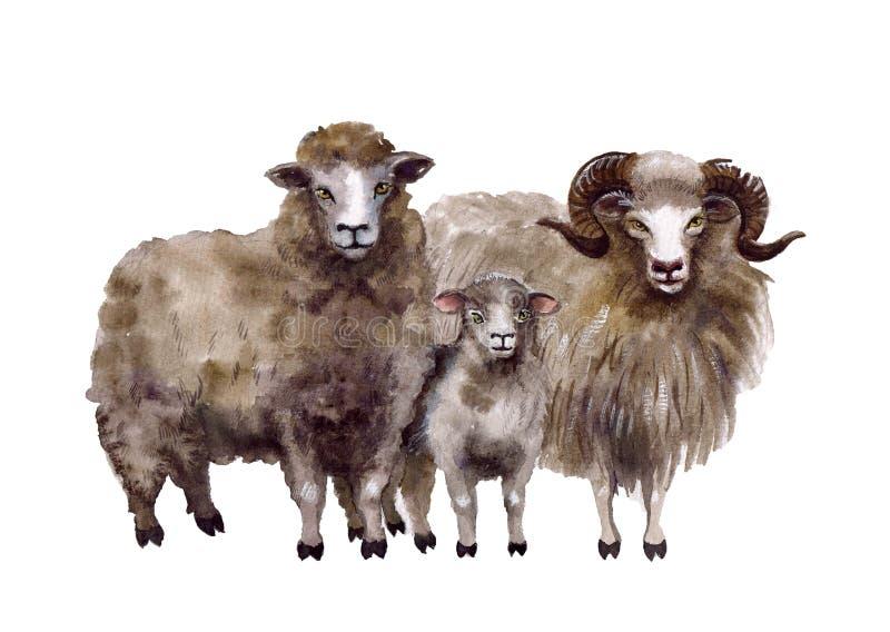 Χαριτωμένα ζώα αγροκτημάτων Watercolor Απεικονίσεις προβάτων ελεύθερη απεικόνιση δικαιώματος
