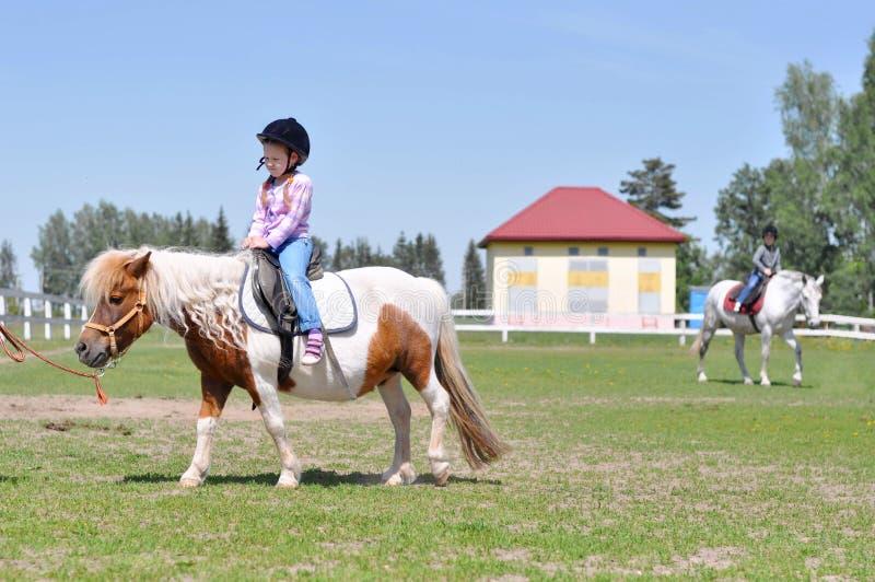 Χαριτωμένα μικρά κορίτσια που οδηγούν τα άλογα στο λιβάδι στοκ εικόνες