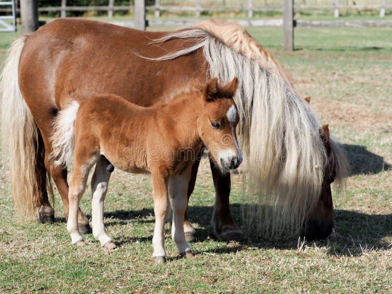 Χαριτωμένα φοράδα και Foal στοκ φωτογραφίες