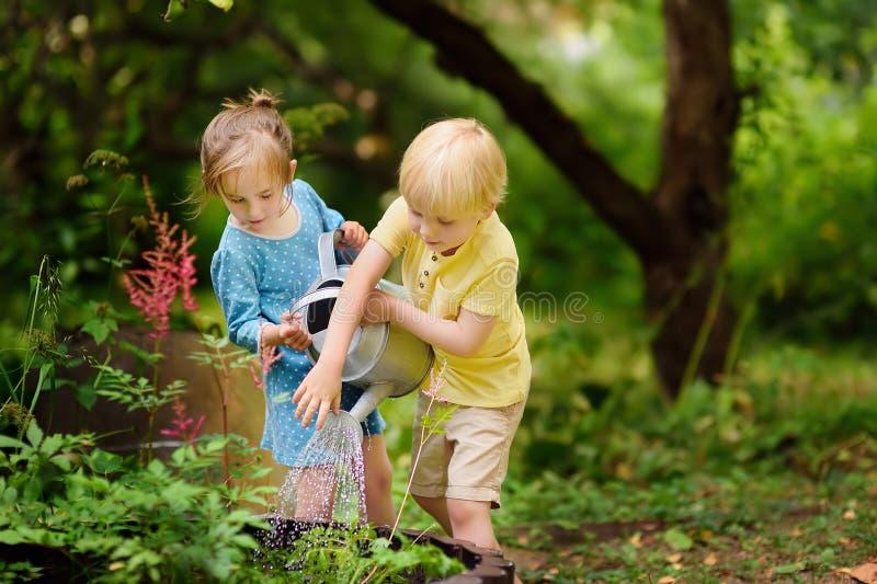 Χαριτωμένες εγκαταστάσεις ποτίσματος μικρών παιδιών και κοριτσιών στον κήπο στη θερινή ηλιόλουστη ημέρα στοκ εικόνες